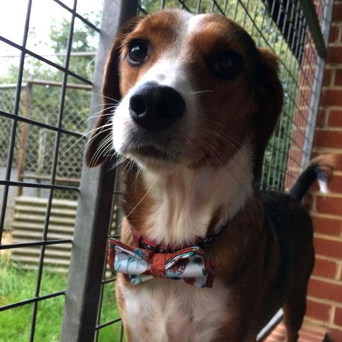 dog with stylish bow tie