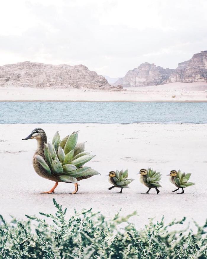 ducks with plants back surrealism photography luisa azevedo