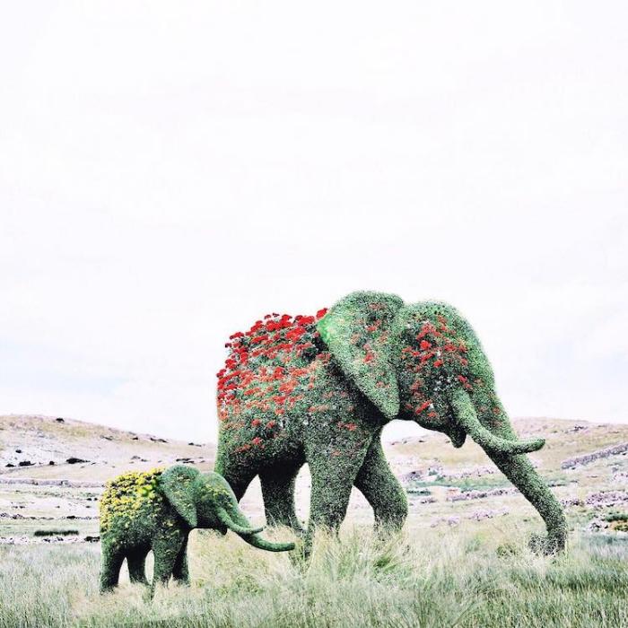 elephant sprouting flowers surrealism photography luisa azevedo