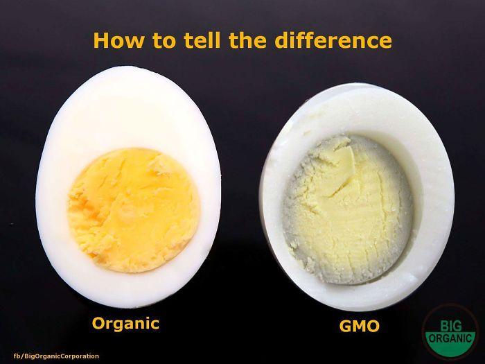 embarrassing moments egg organic gmo