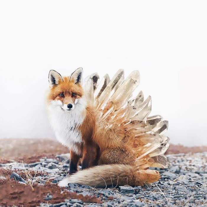 fox with feathers surrealism photography luisa azevedo