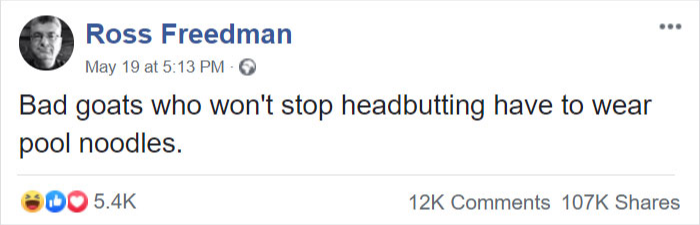 goat horns head butting pool noodles safety facebook comment