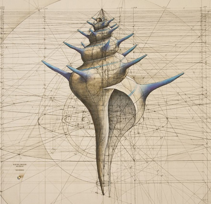 golden ratio illustrations Fibonacci sequence shell