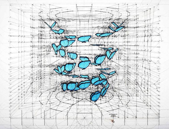 golden ratio illustrations blue morpho double helix
