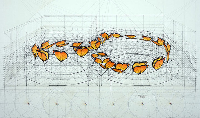 golden ratio illustrations butterfly infinite sequence