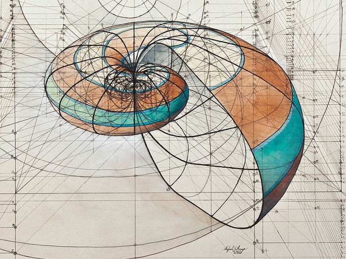 golden ratio illustrations chambered nautilus shell