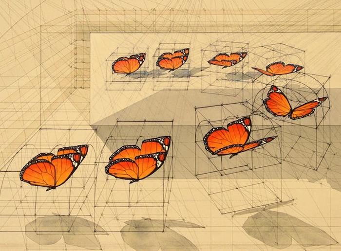 golden ratio illustrations danaus plexippus mirror