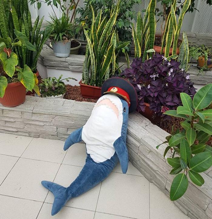 ikea plush shark toy birthday garden captain