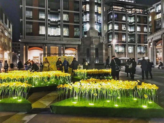 illuminated daffodils london city