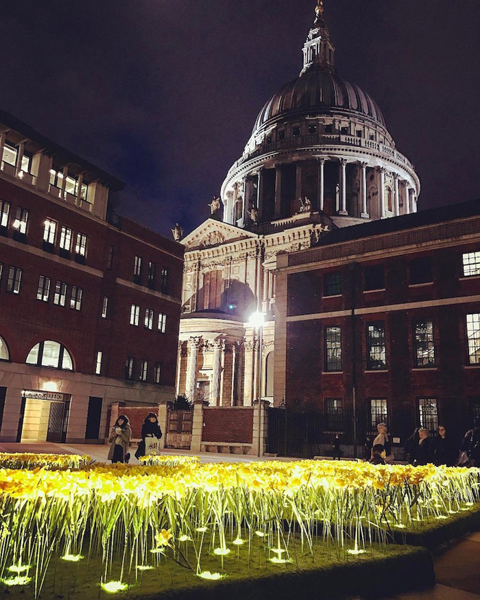 illuminated daffodils paternoster square london