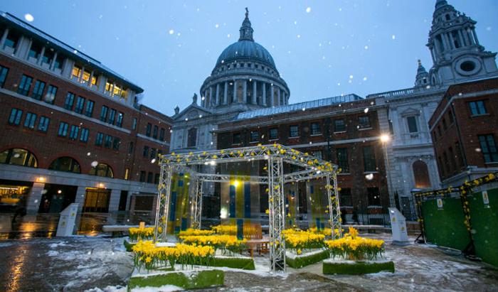 illuminated daffodils paternoster square