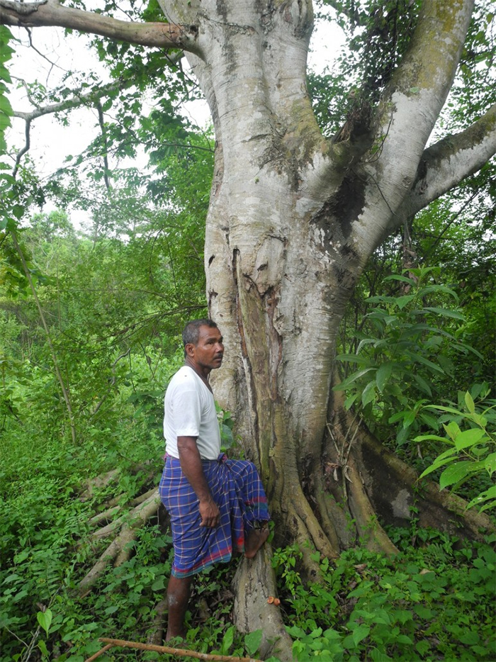 jadav payeng save environment plant trees