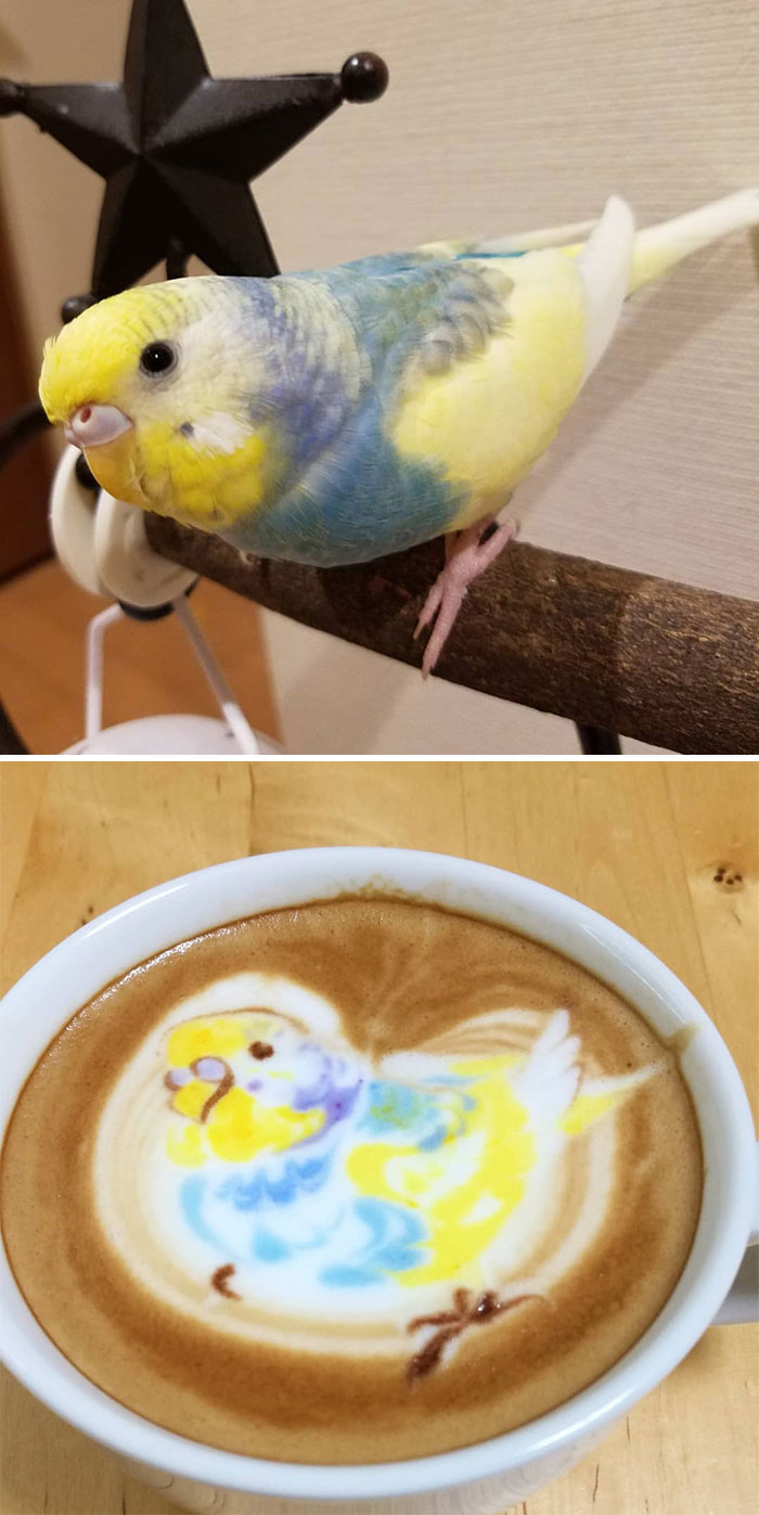 ku-san bird latte art colorful