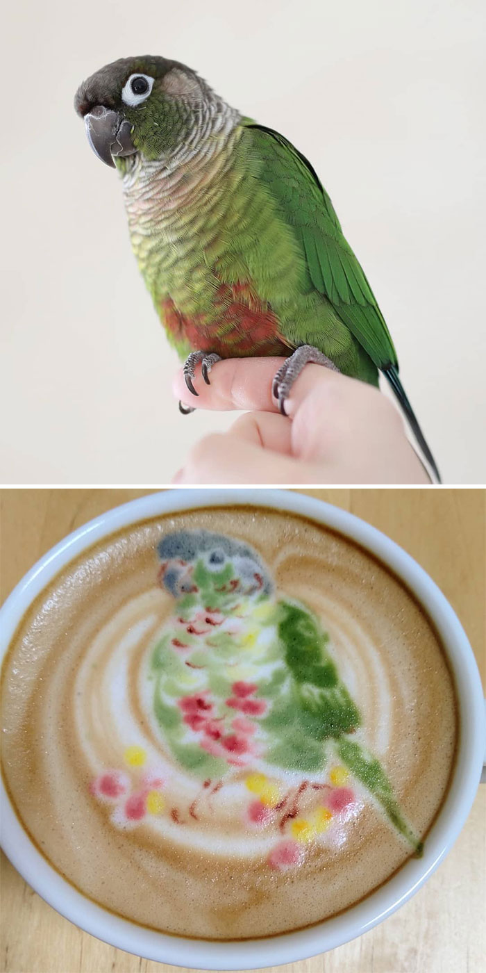 ku-san bird latte art green pink parrot