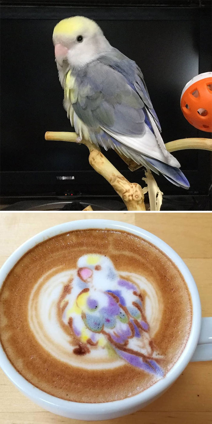 ku-san bird latte art grey bird