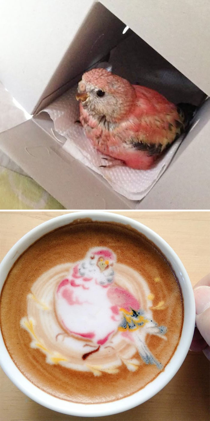 ku-san bird latte art pet parrot sakura