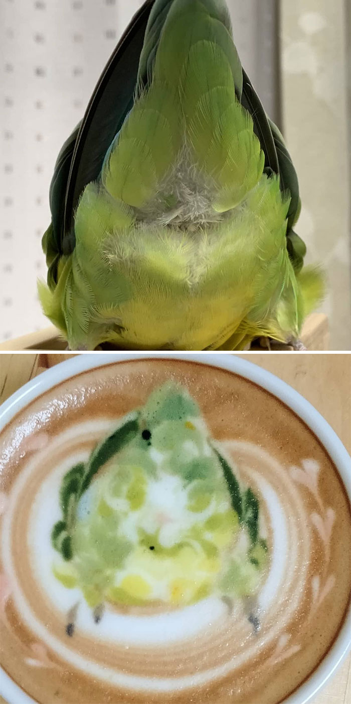 ku-san bird latte art rear