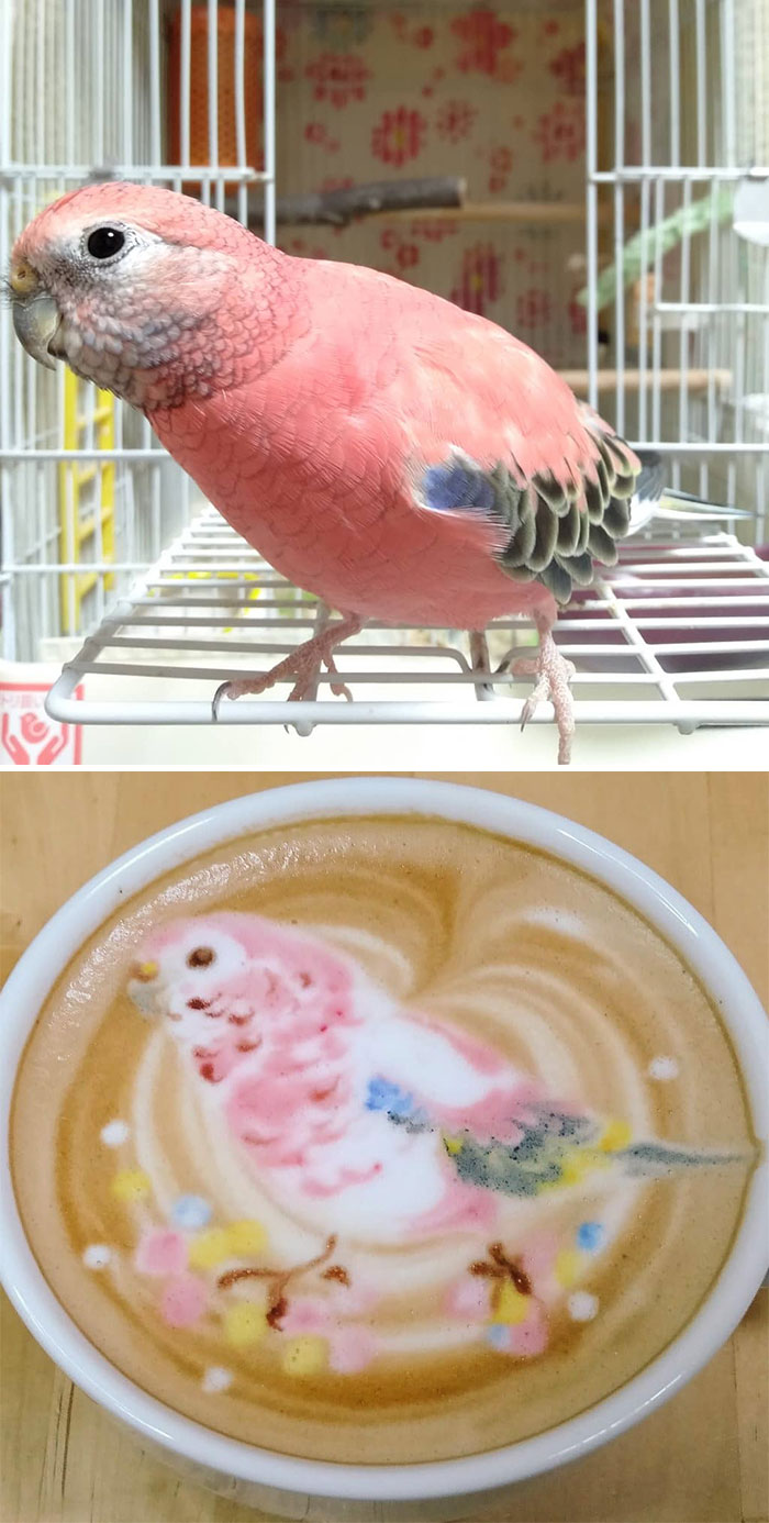 ku-san bird latte art sakura pet