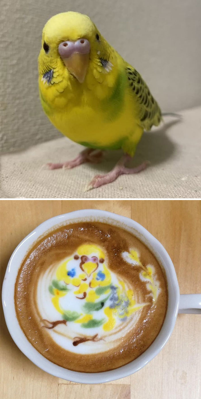 ku-san bird latte art yellow bird