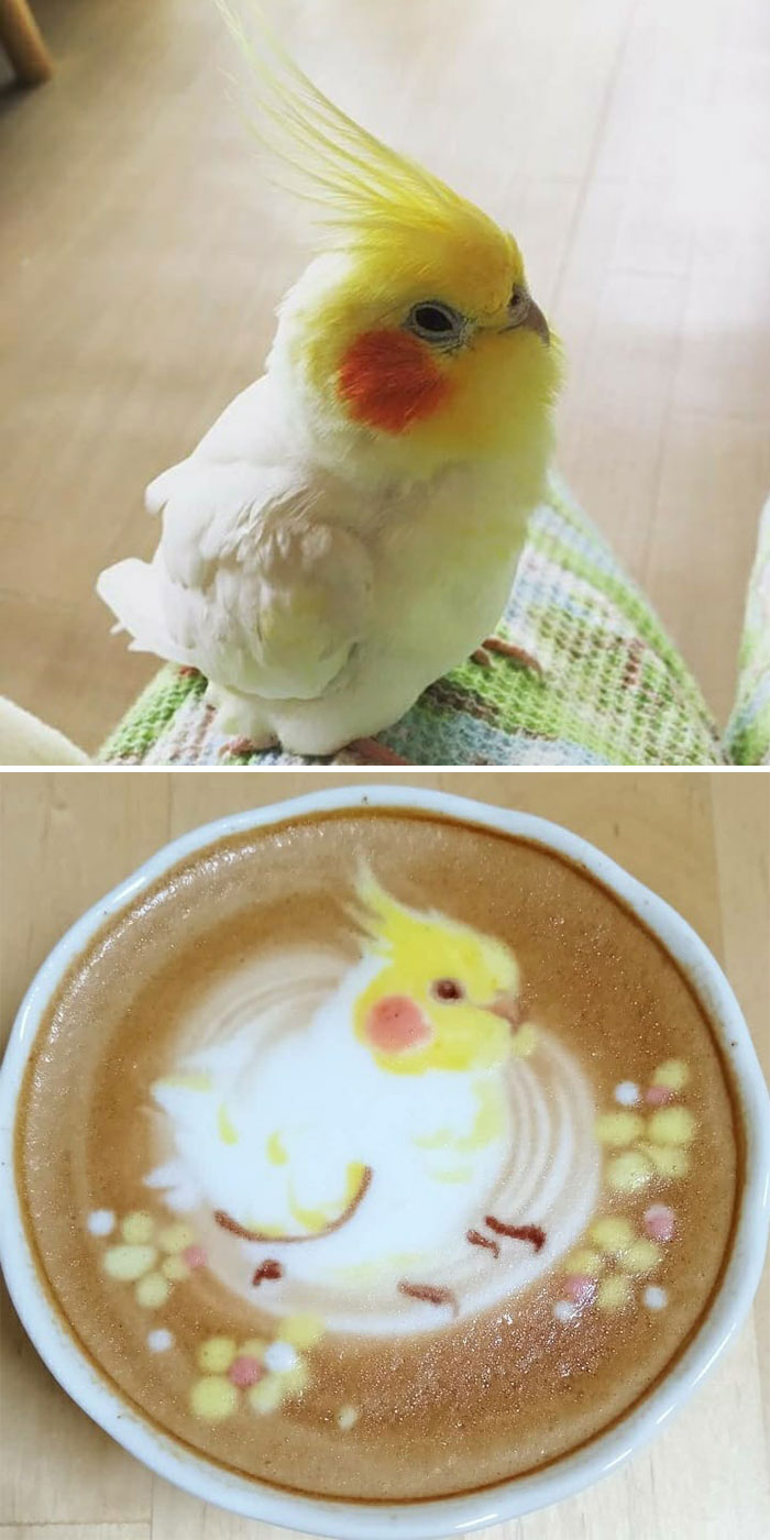ku-san bird latte art yellow-headed parrot