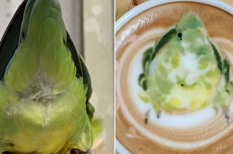 latte art with birds