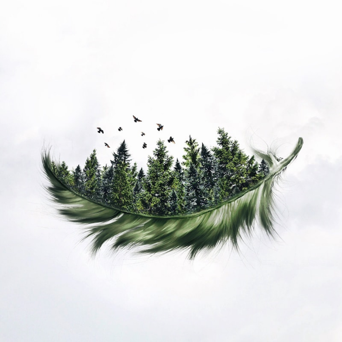 lush forest feathers surrealism photography luisa azevedo
