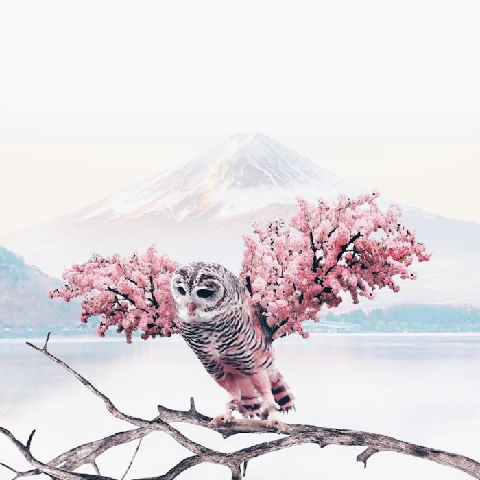 owl cherry blossoms surrealism photography luisa azevedo