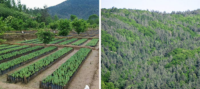 pakistan plants 10 billion trees