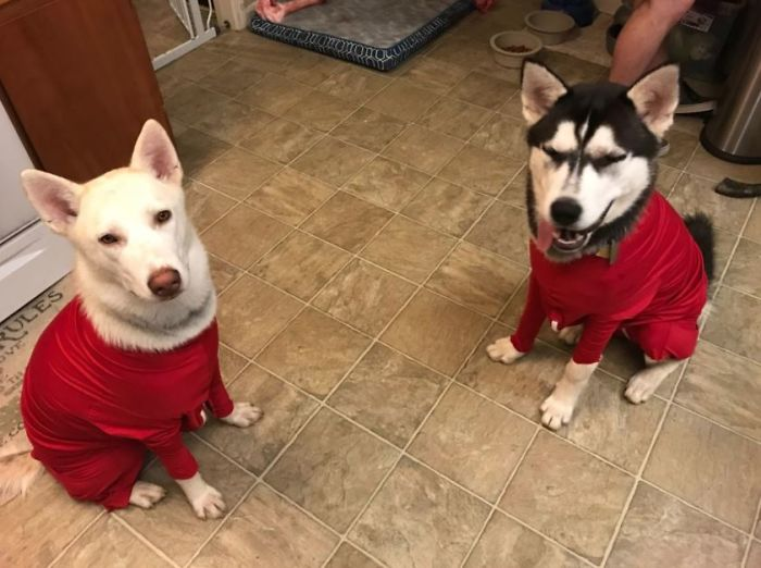 shed defender dog onesie comment andreina photo