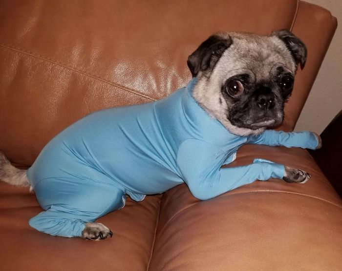 shed defender dog onesie comment darby photo