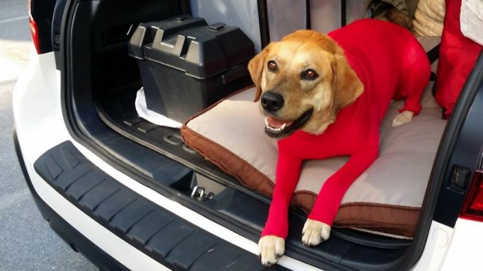 shed defender dog onesie comment happy photo