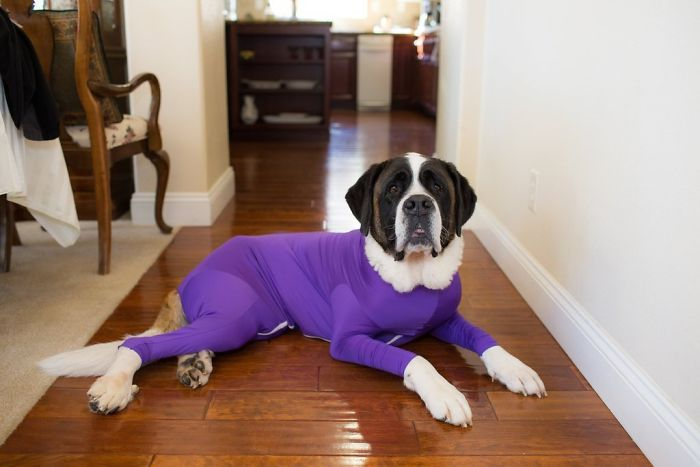 shed defender dog onesie purple