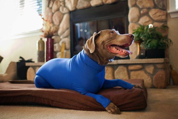 shed defender dog onesie royal blue