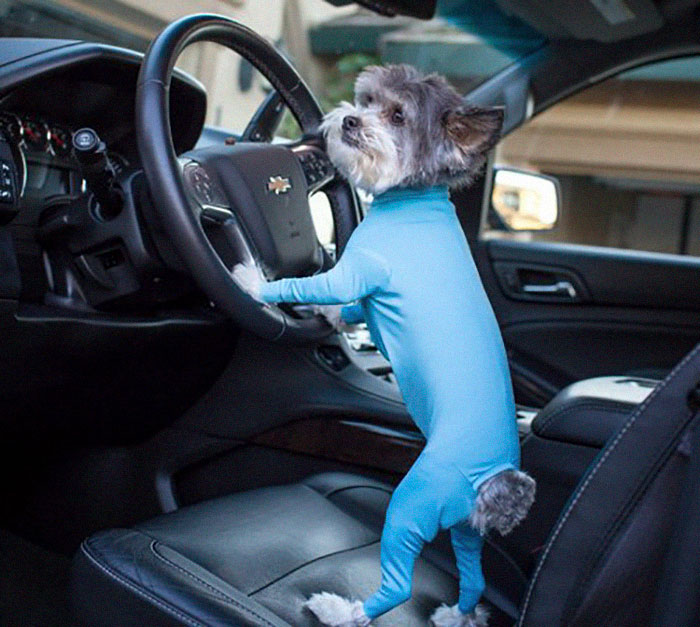 shed defender dog onesie veterinarian-approved