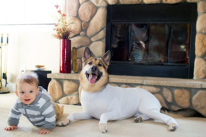 shed defender dog onesie white