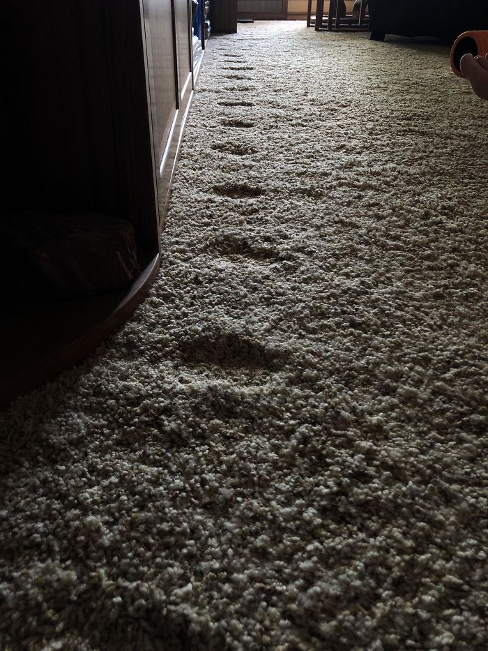 things worn down by time cat pawprint carpet