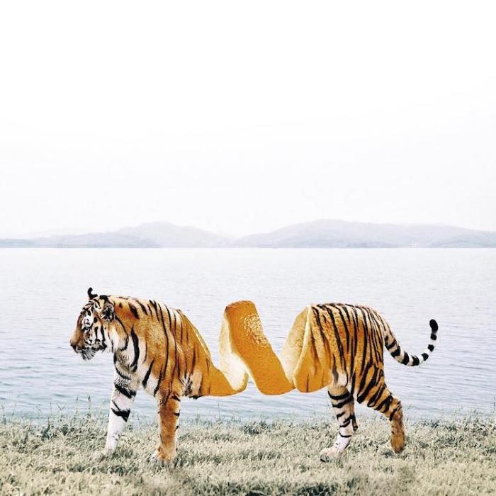 tiger orange peels surrealism photography luisa azevedo