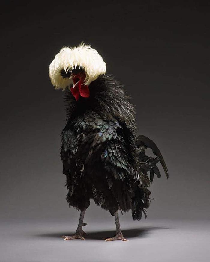 tranchellini monti chicken photobook elegant hair