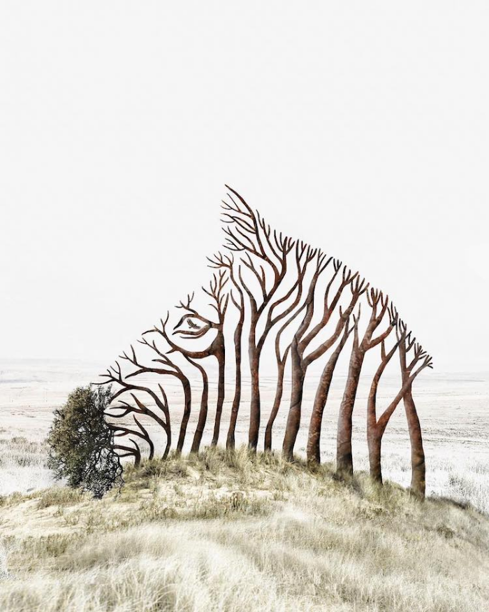 tree zebra surrealism photography luisa azevedo
