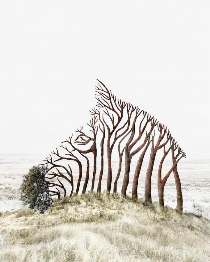 tree zebra surrealism photography luisa azevedo