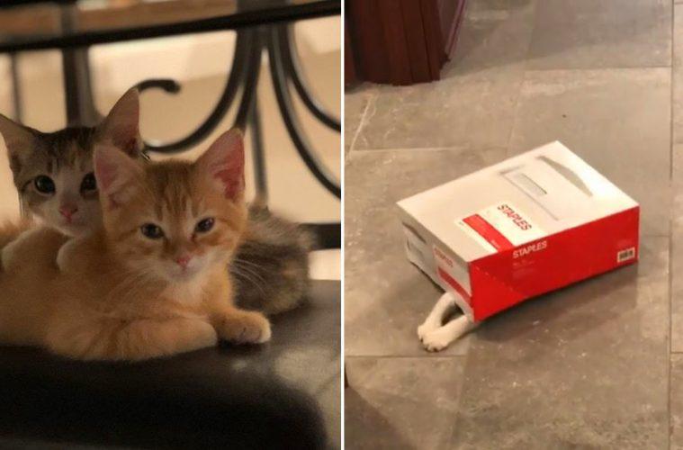 Debit and credit kittens