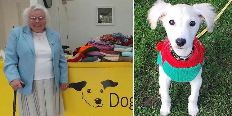 Maisie Green knitting blankets dog