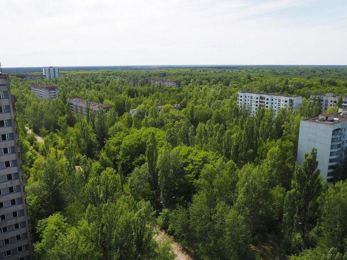 Pripyat nature