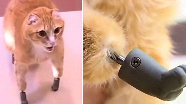 Ryzhik the cat