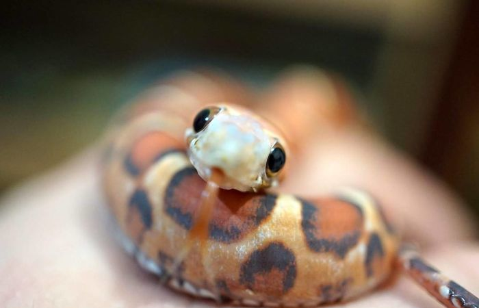 adorable eyes cute snake pictures