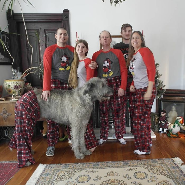 adorable large irish wolfhounds christmas pajamas