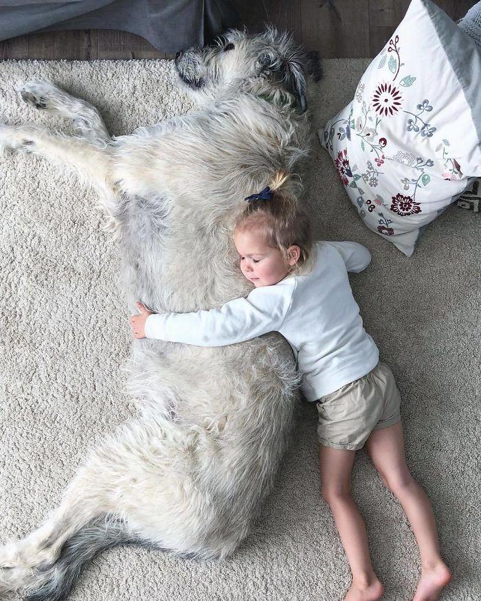 adorable large irish wolfhounds sleeping with baby