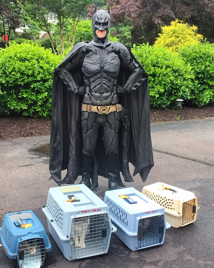 batman pet rescuer transports animal to foster homes