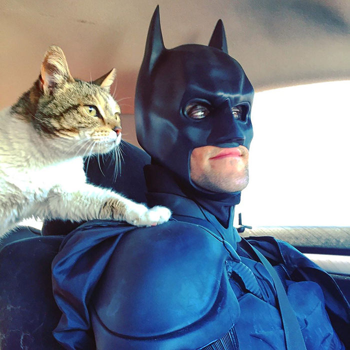 batman pet rescuer transports cats dogs
