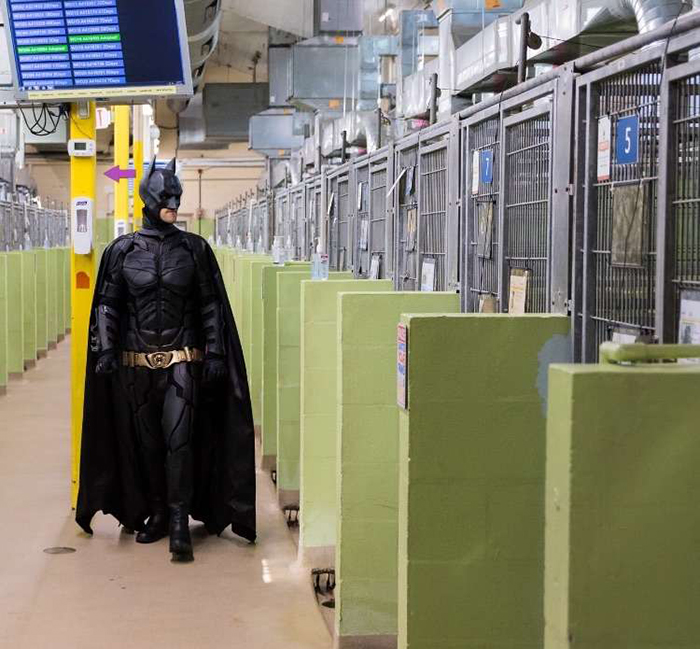batman pet rescuer visiting animal shelter